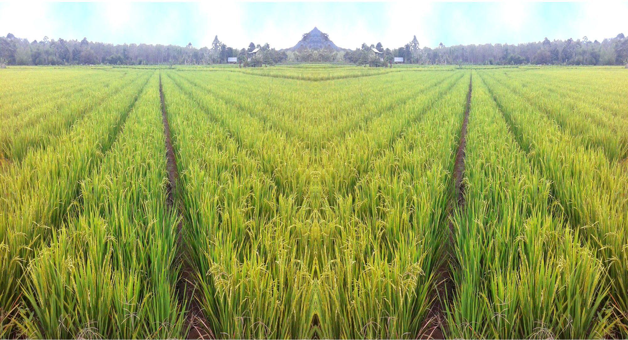 Dinas Pertanian